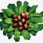 乳油木果脂?乳油木果油? 到底乳油木果有什麼神奇功效?